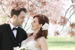 Wedding Couple Under Cherry Blossoms Royalty Free Stock Image