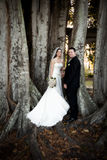 Wedding couple under tree. A bride and groom standing under a large Banyan tree Stock Photography