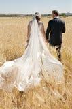 Wedding couple walk through wheat field Royalty Free Stock Photos