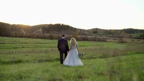 Wedding couple walking in a field. At sunset stock video footage