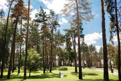 Wedding couple walking in park among green trees and ahead row of houses.  Stock Image