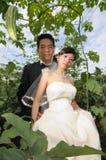 Wedding couples Stock Image