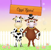 Wedding of cow and bull Royalty Free Stock Image