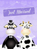 Wedding of cows Stock Photo