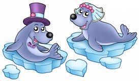 Wedding with cute seals Stock Photos