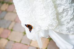 Wedding day. Butterfly on the white wedding dress. stock photo