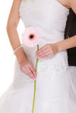 Wedding day. Pink flower gerbera in bride hand Stock Photo
