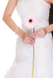 Wedding day. Pink flower gerbera in bride hand Royalty Free Stock Images