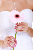 Wedding day. Pink flower in the hands of the bride. Wedding day. Pink flower gerbera daisy in the hands of the bride Stock Images