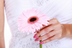 Wedding day. Pink flower in the hands of the bride Stock Photography