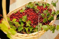 Wedding decor berry Stock Images