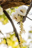 Wedding decor. Flowers on the tree Royalty Free Stock Image