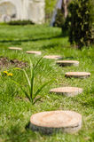 Wedding decor. Section of tree trunk stumps on the green grass Royalty Free Stock Photography