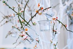 Wedding decor, white and green tree branch with blossoming buds,. Flowering tree branches with white flowers and a garland of candlesticks, branch with blossoms Royalty Free Stock Image