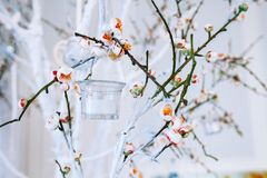 Wedding decor, white and green tree branch with blossoming buds Stock Photos