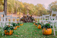 Wedding decoration with autumn pumpkins and flowers. Ceremony outdoor in the park. White chairs for guests Royalty Free Stock Photography