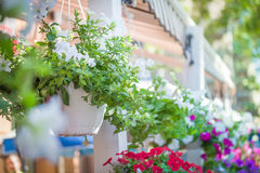 Wedding decorations. Delicate bright flowers in a pot on a fence in a summer cafe in the street Royalty Free Stock Photo