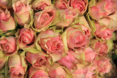 Wedding decorations with pink roses Stock Photos