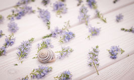 Wedding decorations in Provence style Royalty Free Stock Photography
