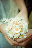 Wedding deisies Royalty Free Stock Image