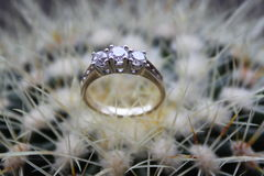 wedding diamont ring Stock Image