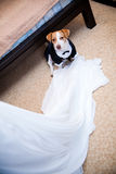 Wedding dog in a coat Stock Photo