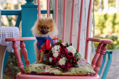 Wedding dog with flowers. The dog with wedding flowers Stock Photography