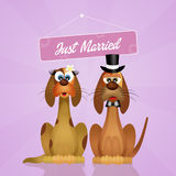 Wedding of dogs Royalty Free Stock Photography