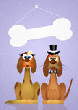 Wedding of dogs Royalty Free Stock Images