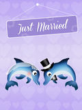 Wedding of dolphins Stock Photos