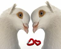 Wedding dove Stock Photo