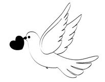 Wedding dove. Beautiful white dove carrying a heart isolated on white background. Great for wedding invitations, websites etc Stock Images