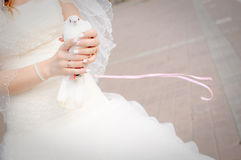 Wedding dove Stock Images