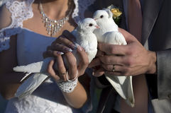 Wedding doves. Bride and groom holding doves, white birds fly in the sky, wedding ceremony, wedding dress, bride and groom are very fond of each other Stock Photography