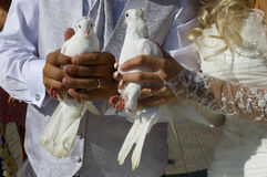 Wedding doves Royalty Free Stock Photography