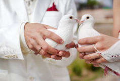 Wedding doves. White wedding doves in arms Stock Photo