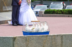 Wedding doves Royalty Free Stock Photos