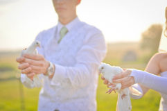 Wedding doves. Bride and Groom at their wedding day holding doves in their hands. Background is blurred in bokeh Royalty Free Stock Photo