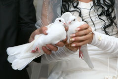 Wedding Doves Stock Image