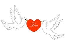 Free Wedding Doves Stock Photo - 8017510