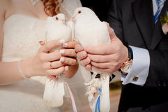 Wedding doves Stock Photos