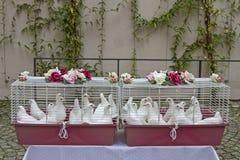 Wedding doves Stock Image