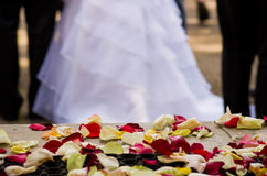 Wedding dress with petals Stock Images