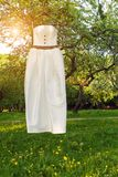 Wedding dress in a spring park Stock Photography
