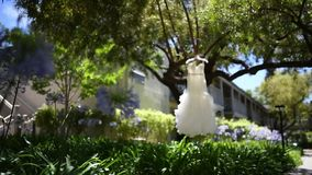 Wedding dress on a tree.  stock video
