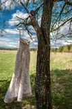Wedding dress on a tree against a cloudly sky royalty free stock image