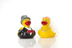 Wedding ducks couple Stock Images