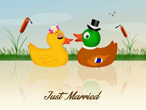 Wedding of ducks. Illustration of ducks spouses in the pond Royalty Free Stock Photography