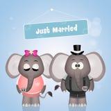 Wedding of elephants Stock Photography