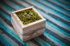 Wedding engagement rings close up lying on moss. Royalty Free Stock Image